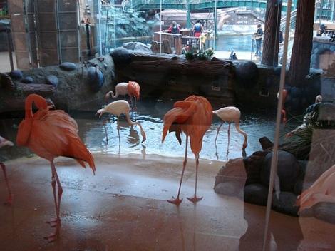 flamingosWEM